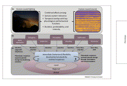 A framework to assess evolutionary responses to anthropogenic light and sound