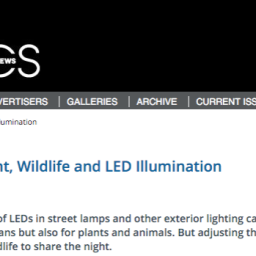 Optics and Photonics News Covers Environmental Impacts of Lighting