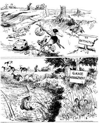 Cartoonist Ding Darling illustrated the need for scientific game management in the early decades of the 1900s.
