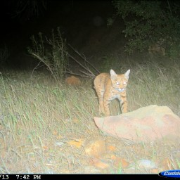 New paper: underpass use by wildlife
